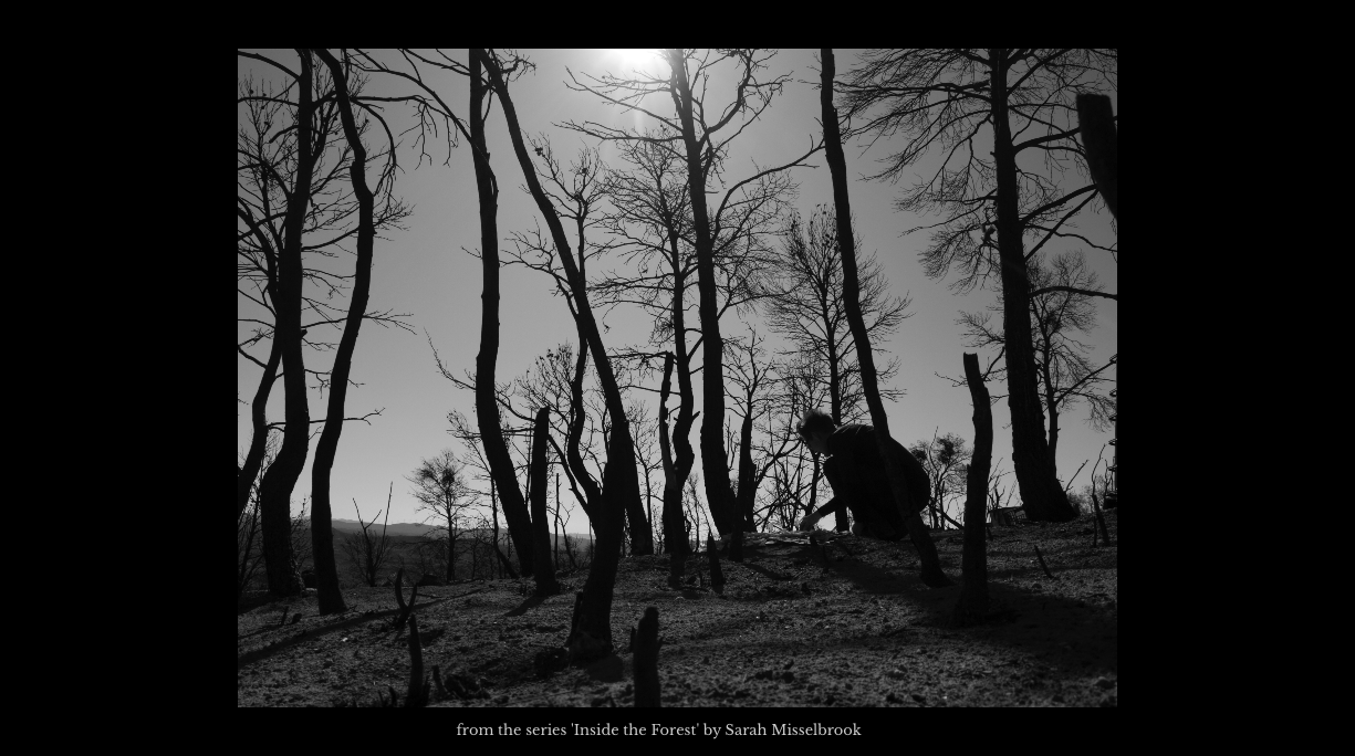 Screenshot_2020-04-16-Dark-Mountain-Issue-17-Dark-Mountain